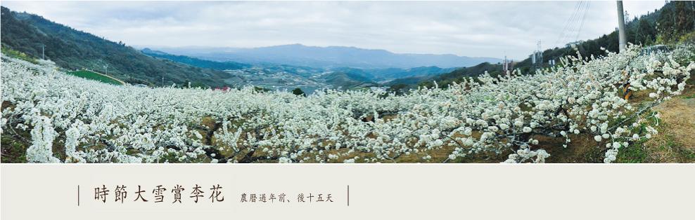 02_seasonflower